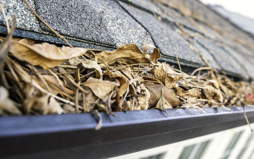 gutter cleaning services leaves cleared